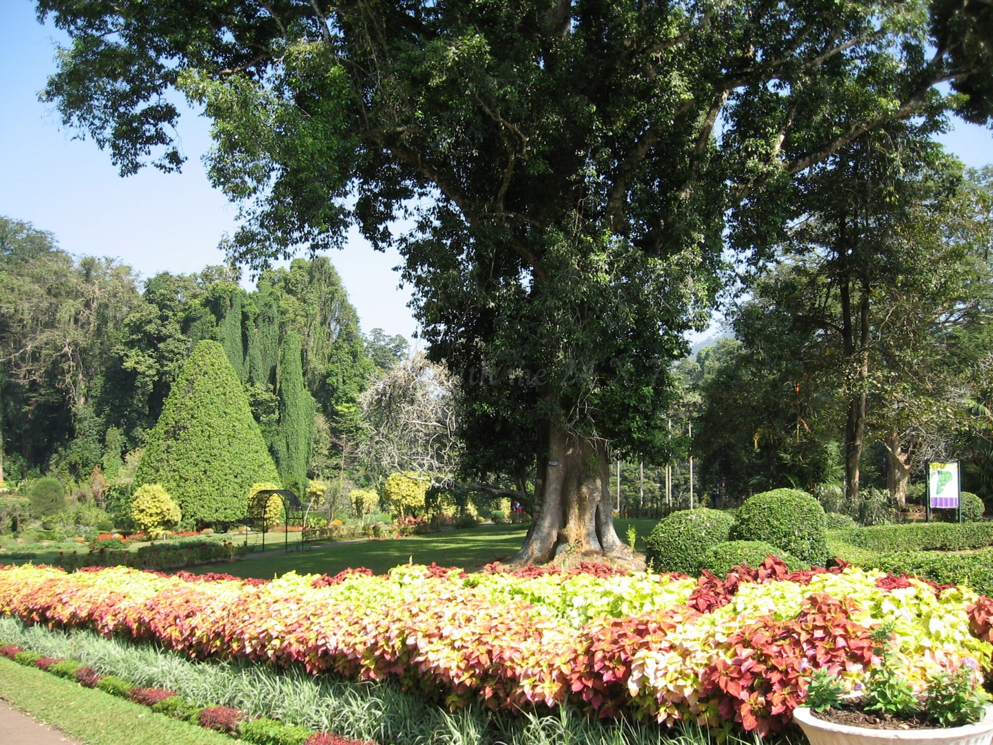 Glimpses Of Royal Botanical Garden Travel With Me 24 X 7